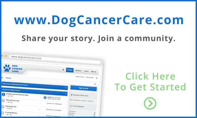 Visit our Dog Cancer Care Canine Lymphoma Message Board