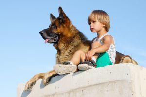 Canine Lymphoma Diet
