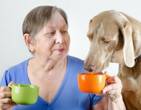Canine Lymphoma Chemotherapy Doxorubicin